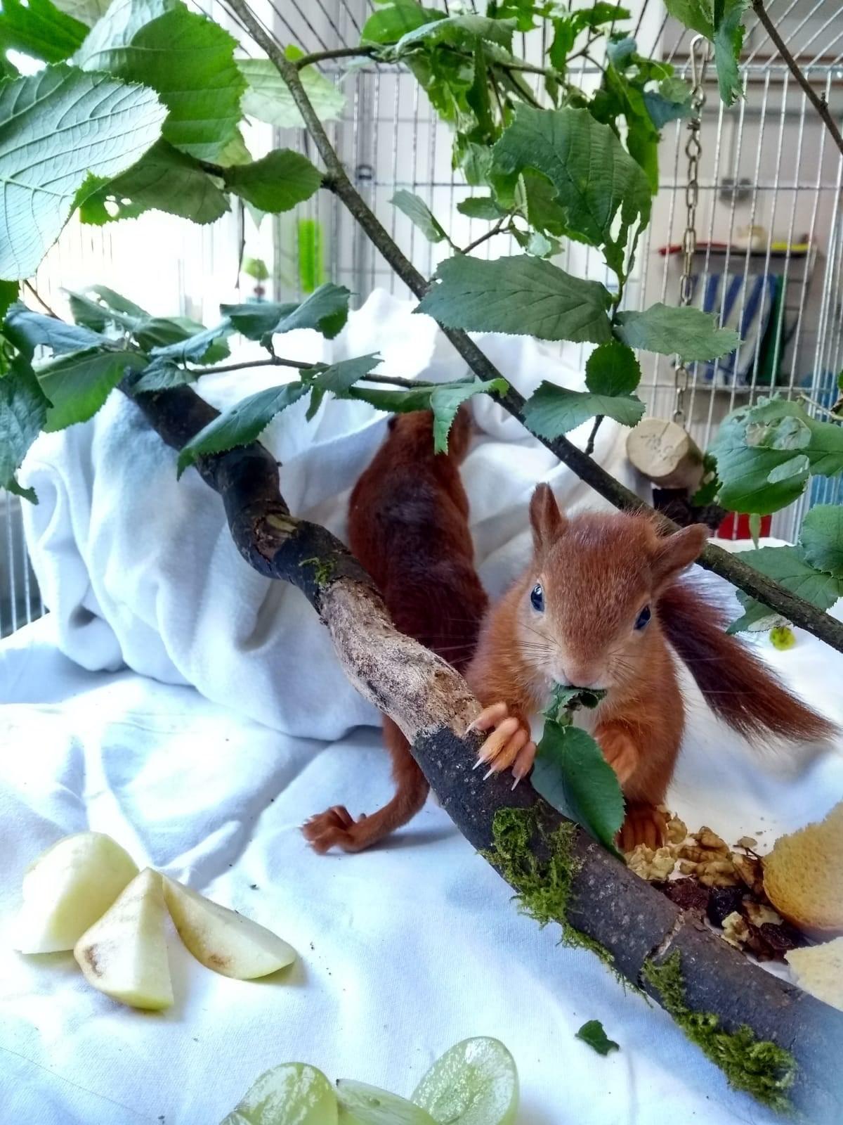 Feuchte Eichhörnchen Schwarze lesbische Sexgeschichten